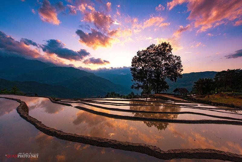 quanphoto, landscape, sunset, sundown, dust, twilight, purple, reflections, terraces, farmland, agriculture, mountains, tree, highland, vietnam Purple Sunsetphoto preview