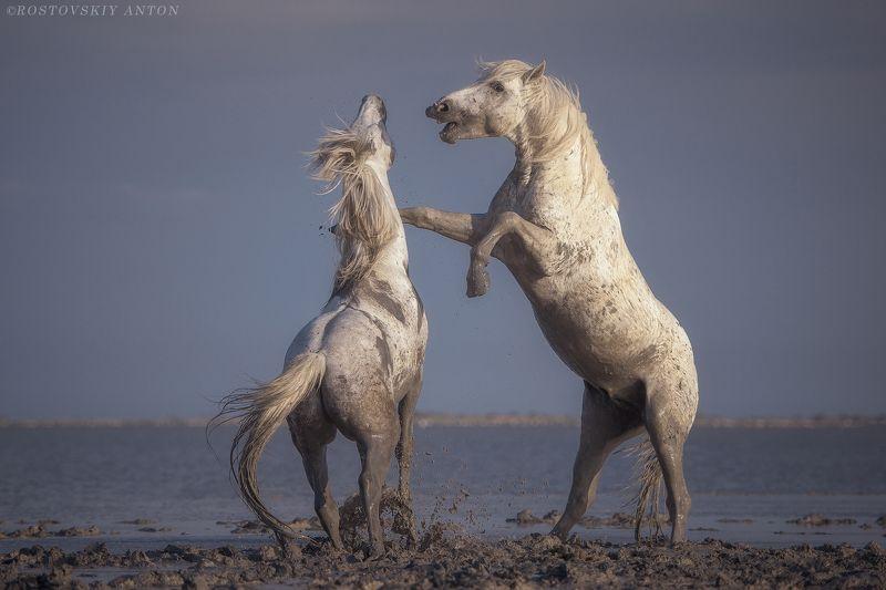 Камарг, фототур, жеребцы, кони, Франция, фотопутешествие, triplaunch, активные игрыphoto preview