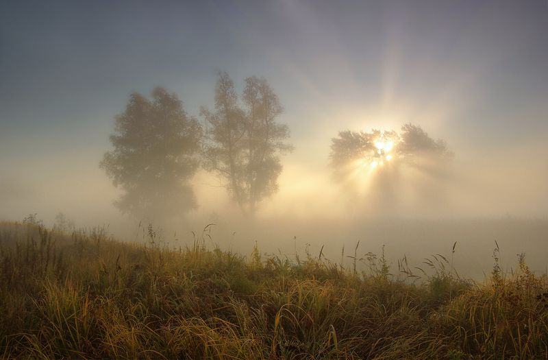 свет, утро, туман, деревья, лучи, солнце Свет летнего утраphoto preview