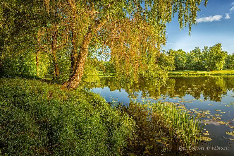 утро, лето, озеро, пруд, кузьминки, пейзаж, morning, summer, lake, pond, kuzminki, landscape, Где-то у Лукоморьяphoto preview