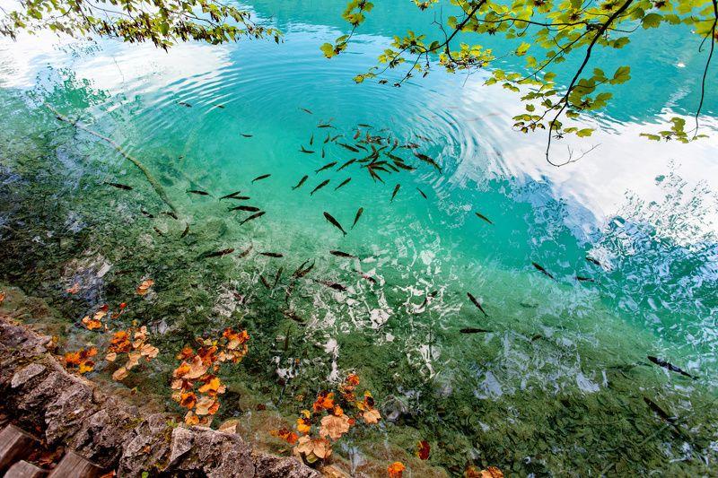 Плитвицкие озёра, Хорватияphoto preview