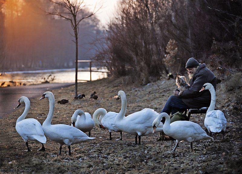 одиночество, старик, лебеди, собака Не один. фото превью