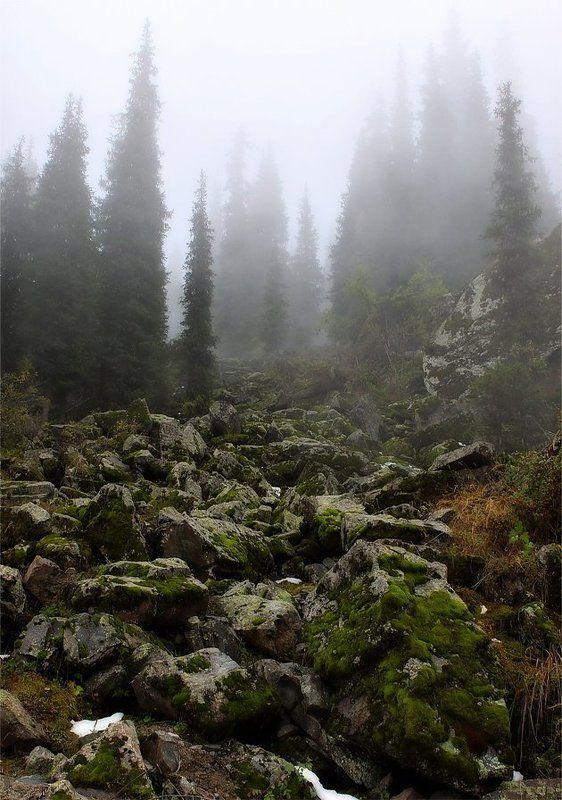 камни,тропа,туман Каменная тропаphoto preview