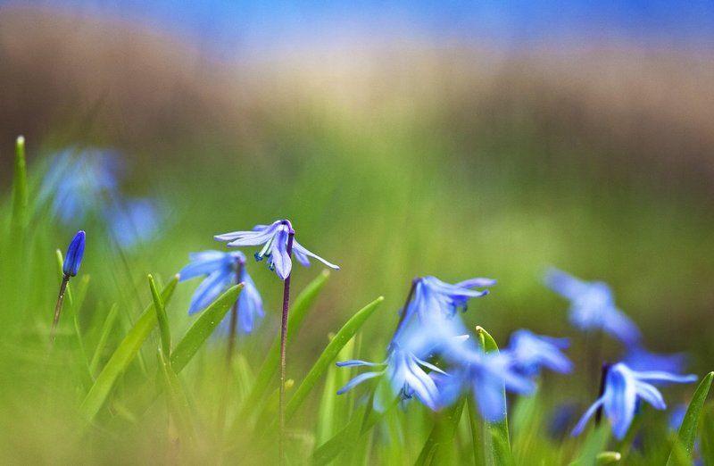 цветы, май, жизнь Первоцветы. фото превью