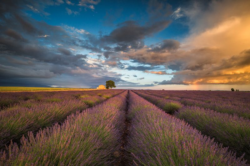 Lavender fields photo preview