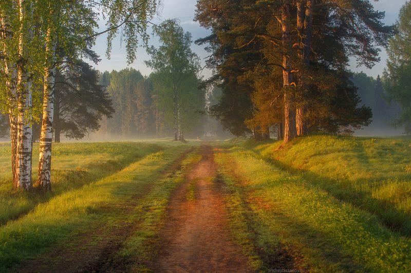 Утро в Шишкинском лесуphoto preview
