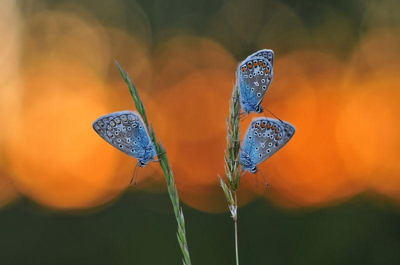 закат, бабочки, природа В тишине закатаphoto preview