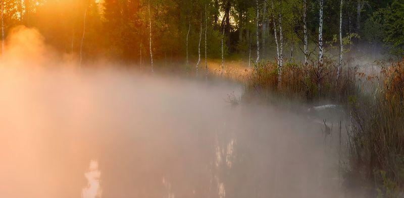 питет, рассвет, пейзаж, утро, туман, болото, озеро Утро о о о оphoto preview