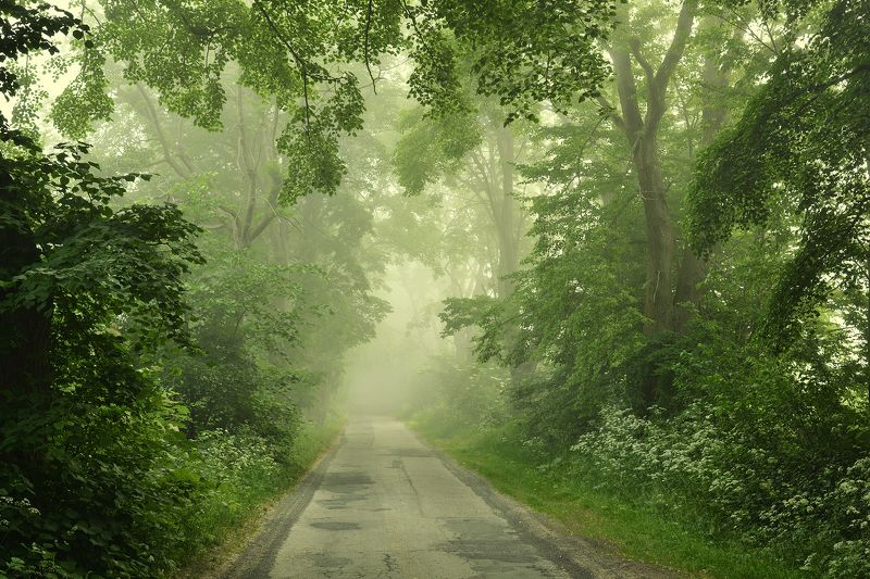 road path misty foggy trees green spring poland magic Misty Road 03photo preview