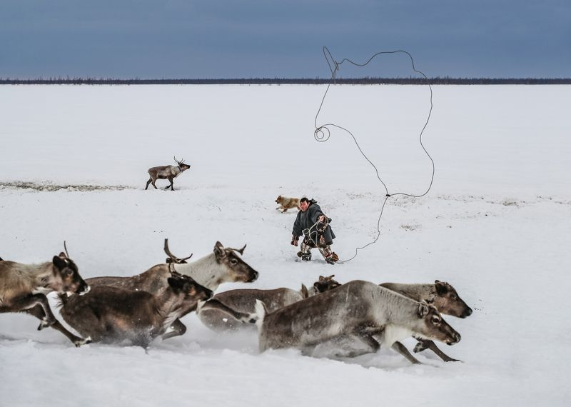 ненец ,тынзян , аркан, олени, ямал Ненец с тынзяном (Тынзян - это аркан для ловли оленей)photo preview