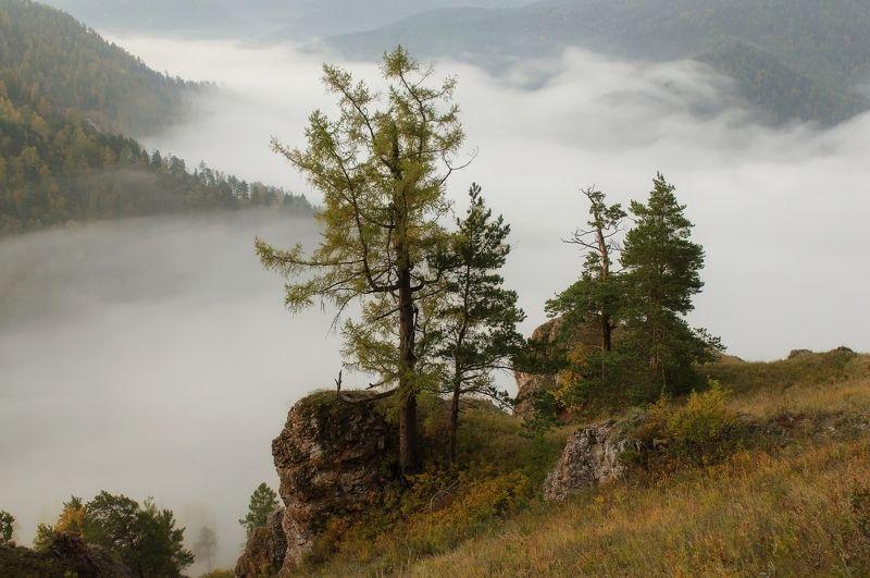 торгашинский хребет. склон. туман. Просыпается природа.photo preview