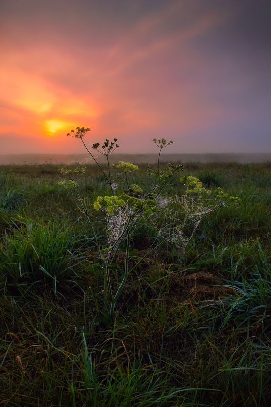 рассвет, паутина, осень, Про рассветphoto preview