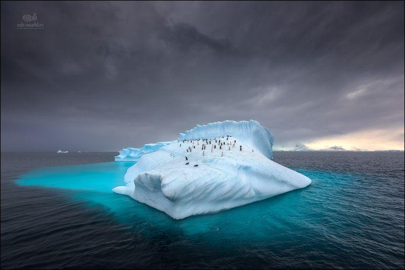 Антарктида, пейзаж, айсберг, закат, пингвины Колония пингвинов на дрейфующем айсберге...photo preview