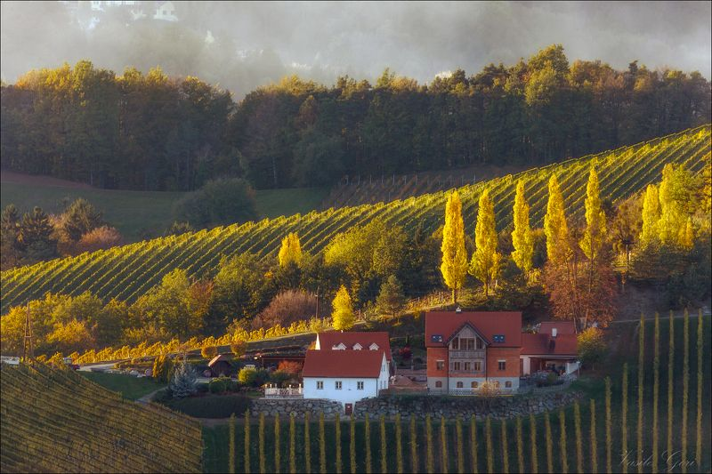 золотая осень,свет,хутор,штирия,австрия,gamlitz- sernau,landscape,виноградники. Осенние зарисовкиphoto preview