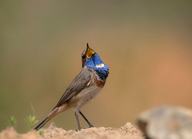 птицы,природа,весна Певецphoto preview