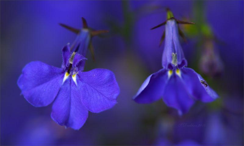 цветы, флора, фауна, весна, макро \