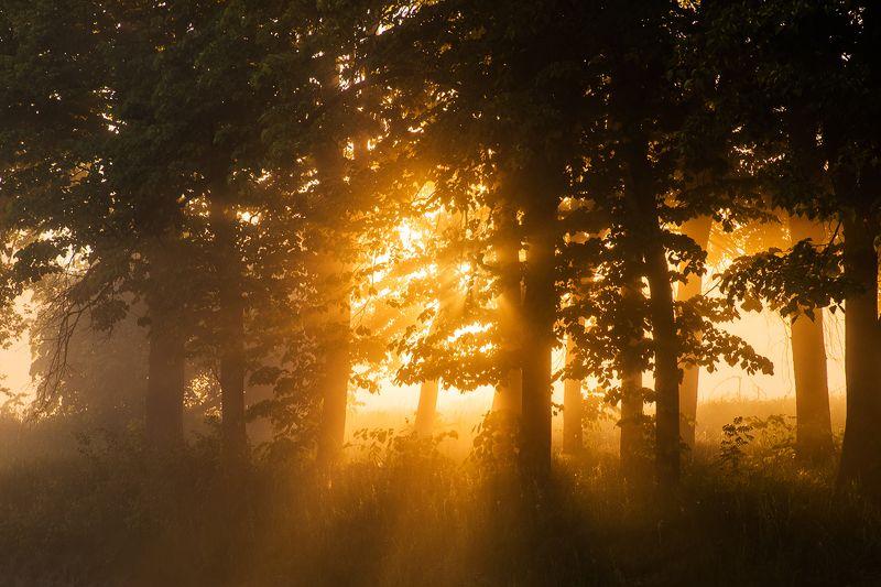 туман, рассвет, лес, река Дыхание летаphoto preview