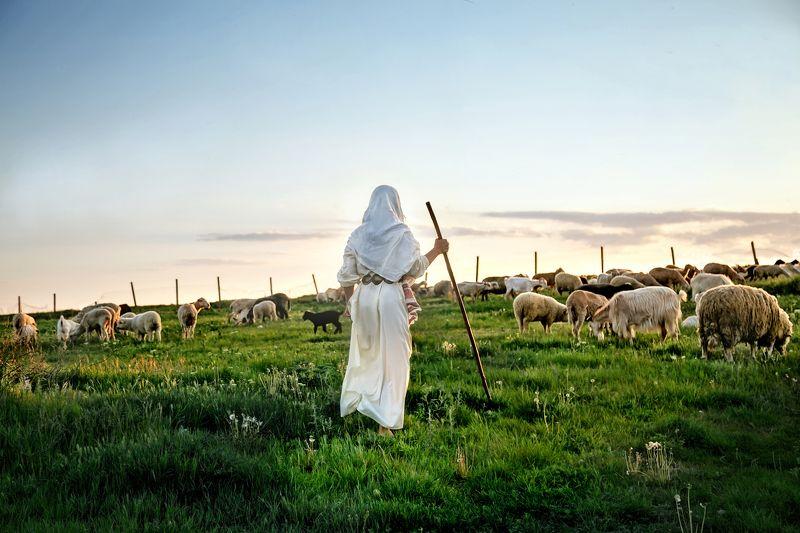 пастушка, овцы, весна  photo preview