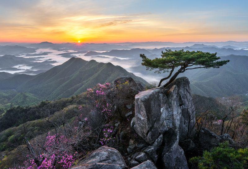 mountain range, daedunsan, rugged,  sunrise Pine tree growing between rocksphoto preview