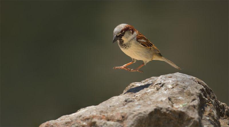 птицы, фауна, весна, воробей Левитацияphoto preview