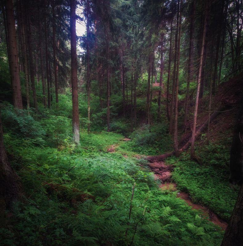 Дождливым июнем в лесуphoto preview