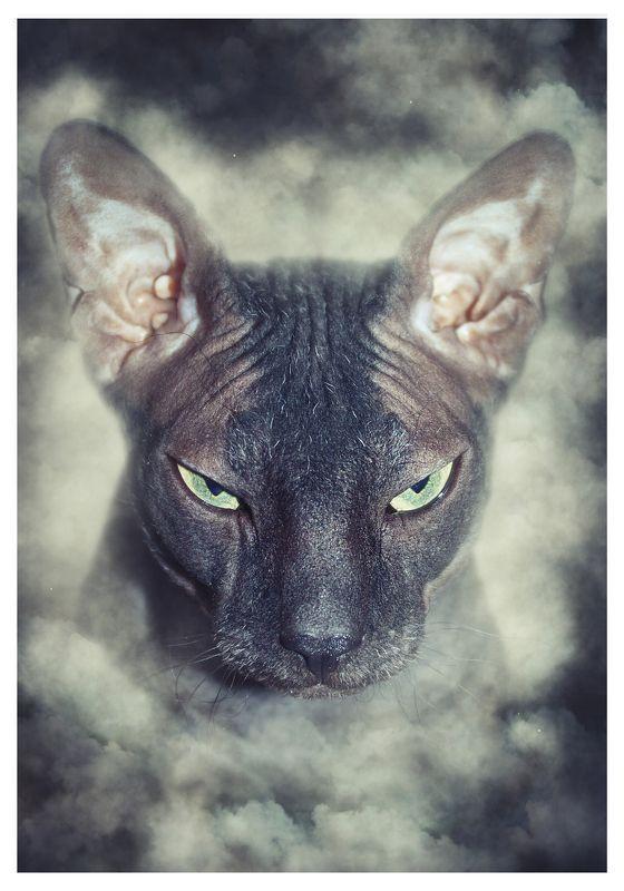 кот, сфинкс, животные А в душе я романтик!photo preview