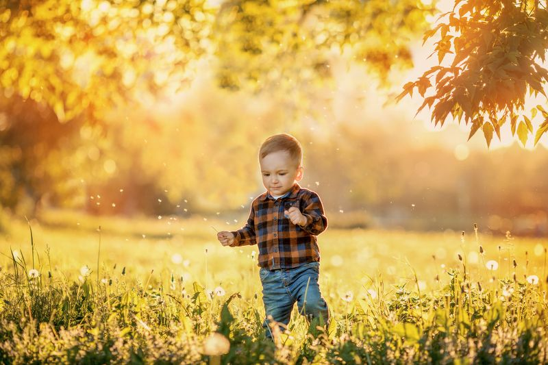 Мальчик, закат, поле, одуванчики, лето photo preview