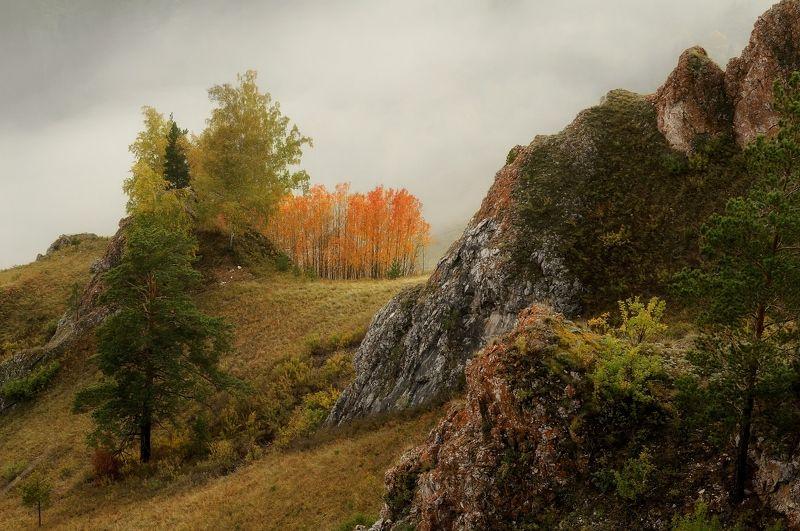 торгашинский хребет. склон. осинки.. Осинки.photo preview