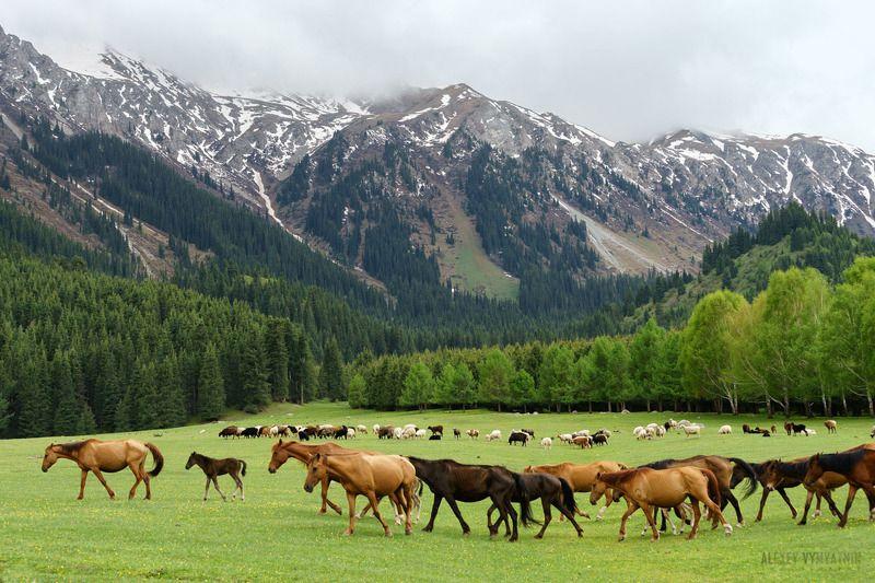 киргизия, иссык-куль, горы, лошади, долина, лето В горах Киргизииphoto preview