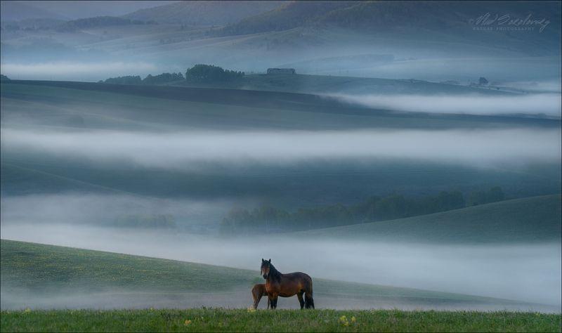 алтай, утро, лето, туман, кони, алтайский край Ходят кони ...photo preview