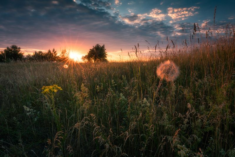 meadow spring wildflowers flowers sunset sky clouds colors mood poland podlasie Winnie the Pooh...photo preview