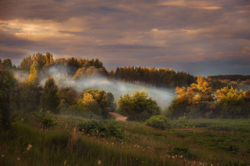 утро, рассвет, туман, природа, лес Волшебный вечерphoto preview