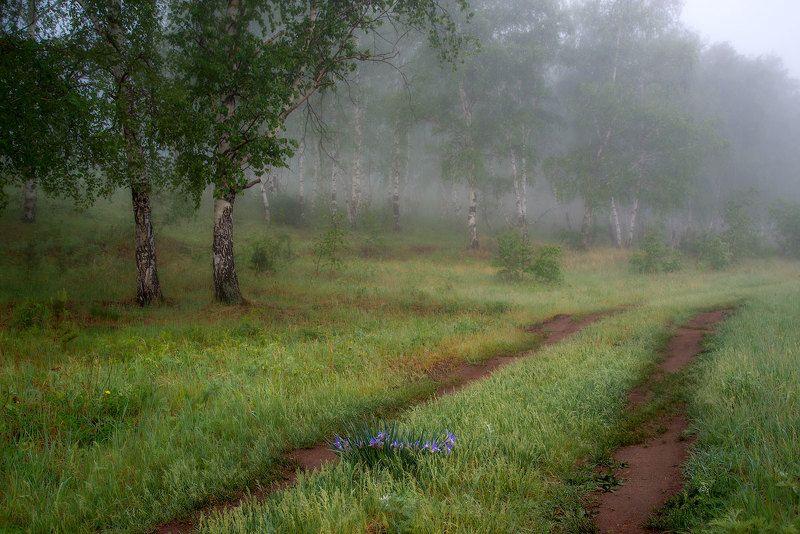 Пейзаж с ирисомphoto preview