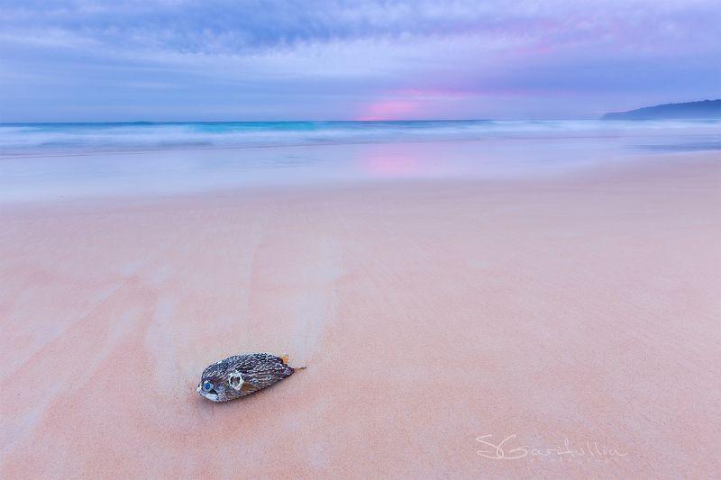 Рыба-еж, Thailand, Тайланд Рыба-ежphoto preview