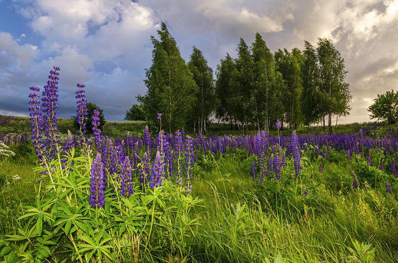 nevant60, пейзаж, красота, небо Перед грозойphoto preview
