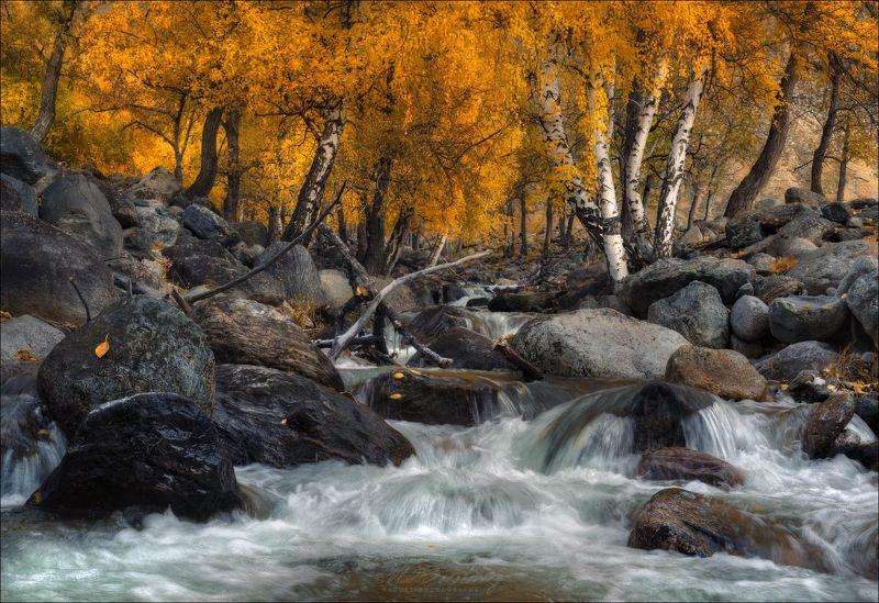 алтай, осень, алтайский край, телецкое озеро, кырсай, сайлюгем, кокоря, березы Алтайская осень ..photo preview