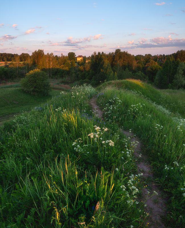 пейзаж, поле, утро, лето, зелень, трава, рассвет ***photo preview