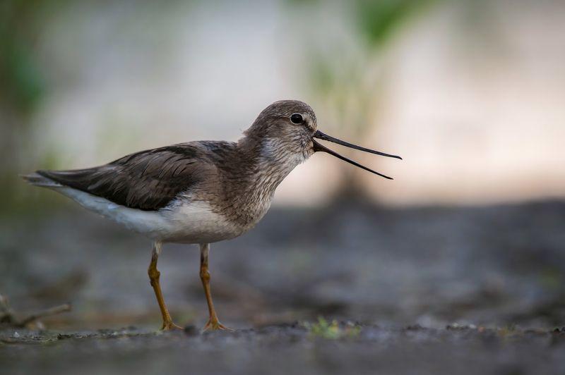 птицы,природа,весна Мородункаphoto preview