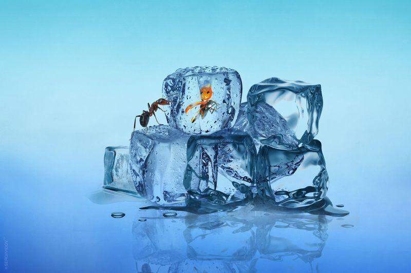 муравей, вода, отражение, лед, божья коровка Спящая красавицаphoto preview
