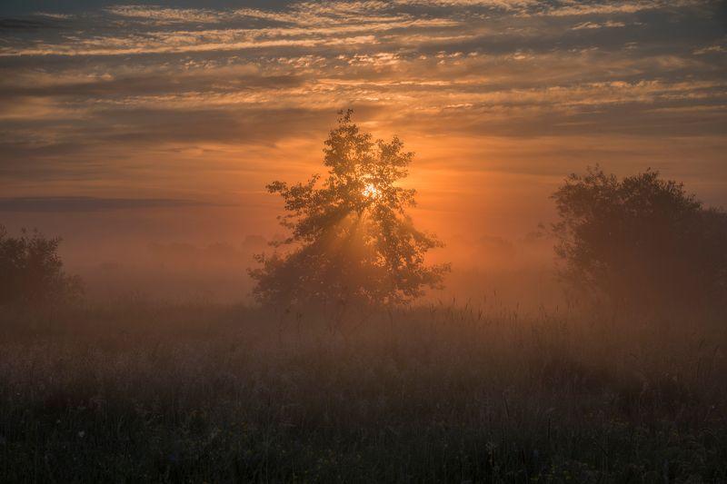утро, рассвет, природа, туман, река В рассветном туманеphoto preview