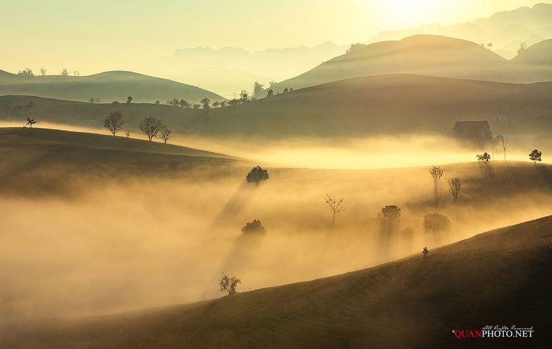 quanphoto, landscape, morning, sunrise, dawn, fog, foggy, mist, misty, hill, plantation, tea, mountains, highland, plateau, vietnam In a Misty Morningphoto preview