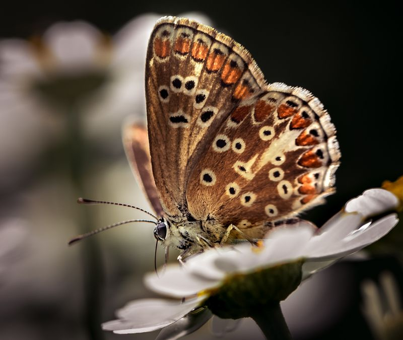 природа, макро, насекомое, бабочка Коврик-самолетикphoto preview