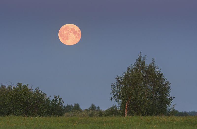 печора,луна,белые ночи Белые ночи севераphoto preview