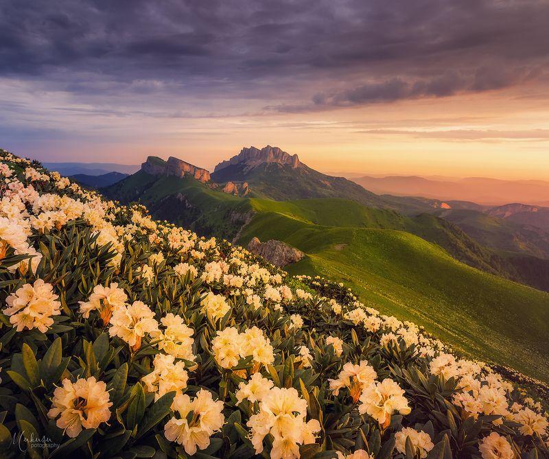 landscape, пейзаж, sunrise, адыгея, Рододендроны Большого Тхача.photo preview