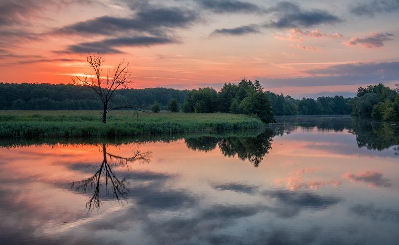 рассвет, пейзаж, природа, утро, река, дерево, небо Отражение реальностиphoto preview