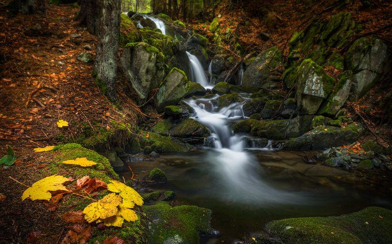 Autumn memories / Осенние воспоминанияphoto preview