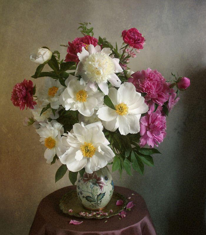 натюрморт, цветы, марина филатова, пионы ***photo preview