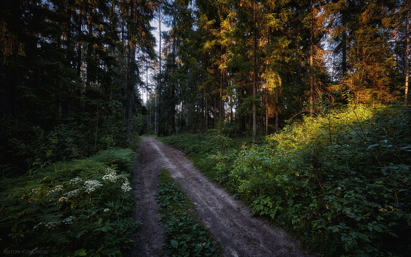 Дорога в лесу...photo preview