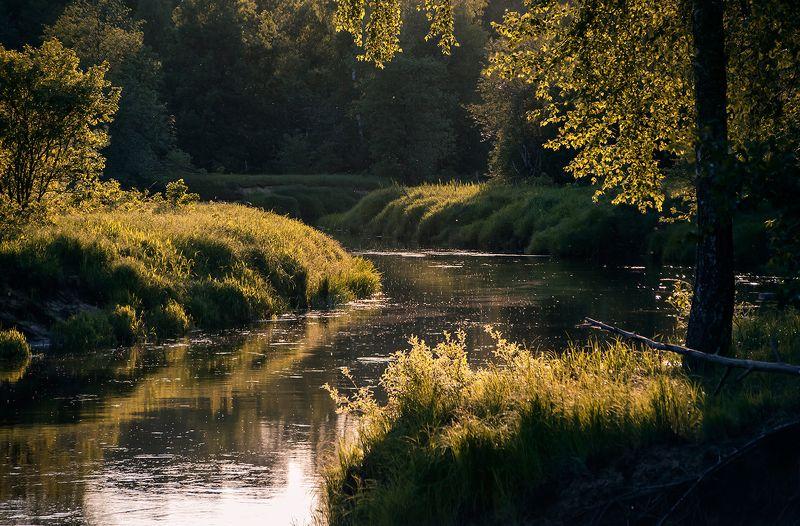 мещёра, река, лес, вечер, берёзы, молодая листва, рязанская область Этюды у вечерней реки …photo preview