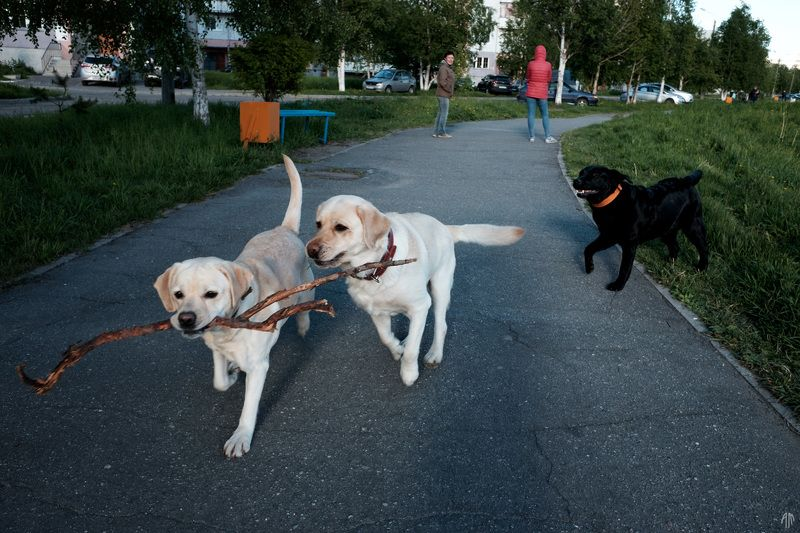 уличная фотография, streetphotography, собаки, Играphoto preview